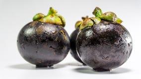 Mangostanfrucht/Mangustan an Hand Lizenzfreies Stockbild