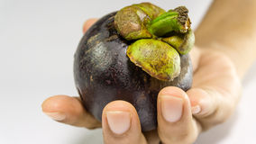 Mangostanfrucht/Mangustan an Hand Lizenzfreie Stockfotografie