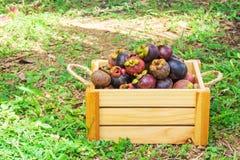 Mangostanfrucht Tropische Frucht Königin der Frucht lizenzfreie stockfotografie
