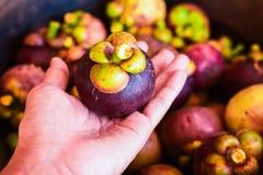 Mangostanfrucht und Querschnitt, die das starke purpurrote Haut- und Weißfleisch der Königin der Früchte zeigen Lizenzfreie Stockfotos