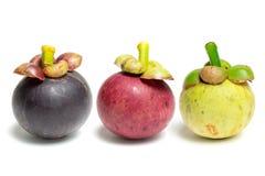Mangostanfruchtkönigin von Früchten lizenzfreies stockfoto