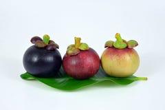 Mangostani su fondo bianco Fotografia Stock