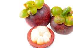 Mangostano della frutta tropicale Fotografie Stock Libere da Diritti