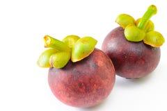 Mangostano della frutta tropicale Fotografia Stock