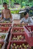 Mangostano una regina di frutta al mercato di frutta, azienda agricola Fotografia Stock