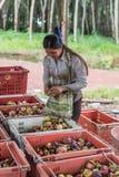 Mangostano una regina di frutta al mercato di frutta, azienda agricola Fotografie Stock Libere da Diritti