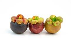 Mangostans Royalty-vrije Stock Foto's
