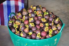 Mangostans Stock Fotografie