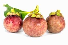 Mangostans Stock Afbeeldingen