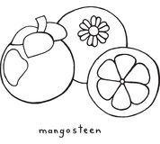Mangosteen χρωματίζοντας σελίδα Γραφική διανυσματική γραπτή τέχνη για Στοκ Εικόνα