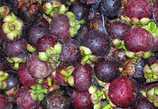 Free Mangosteen Stock Photography - 101492