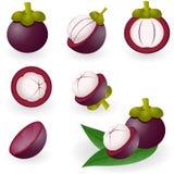 Mangosteen stock illustration
