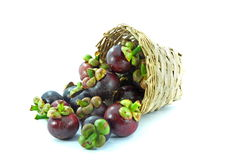 Mangosteen. Is the queen of the tropical fruit Stock Photography