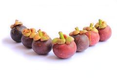 mangosteen Fotografering för Bildbyråer