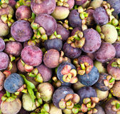 Mangosteen Royalty Free Stock Image