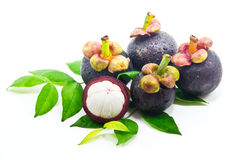 Free Mangosteen Royalty Free Stock Images - 31663699