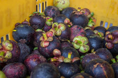 Mangosteen in the basket Stock Image