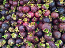 Mangosteen on display Stock Image