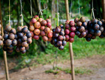 Mangosteen drying Stock Images