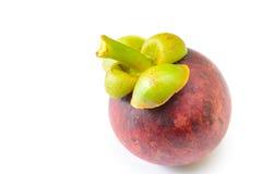 Mangosteen för tropisk frukt Royaltyfri Fotografi