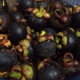 Mangosteen. Fresh Fruits mangosteen Stock Photos