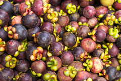 Mangosteen fruit pile Stock Photo