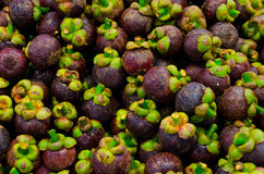 Mangosteen fruit on sales Stock Images