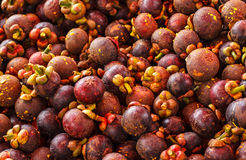 Mangosteen fruit of Thailand. Stock Image