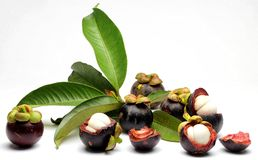 Mangosteen Fruits Stock Image