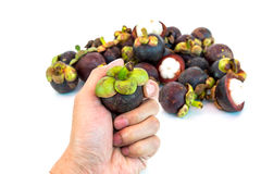 Mangosteen in hand isolated Royalty Free Stock Photography
