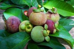 Mangosteen i trädgård Arkivfoton