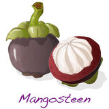 Mangosteen isolated. Vector. Royalty Free Stock Photography