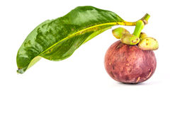 Mangosteen with leaf. Mangosteen  with green leaf on white background Royalty Free Stock Image