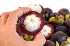 Mangosteen peel in hand  Stock Photo