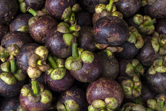 Mangosteen Pile Stock Photography