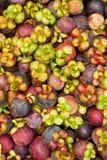 Mangosteen, queen of tropical fruit Stock Image