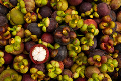 Mangosteen, queen of tropical fruit Stock Photos