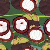 Mangosteen Seamless pattern vector illustration