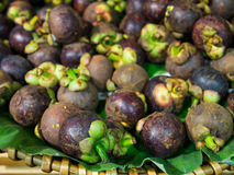 Mangosteen (tropical fruit) Royalty Free Stock Images