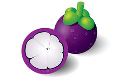 Mangosteen Vector Royalty Free Stock Photo
