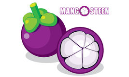 Mangosteen Vector Stock Photos