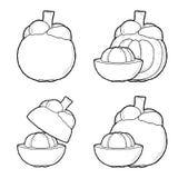 Mangosteen. Vector Illustration Hand Drawn Fruit Cartoon Art royalty free illustration