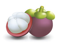 Mangosteen vector illustration. Royalty Free Stock Image