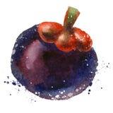 Mangosteen vector logo design template. fruit or Stock Photography