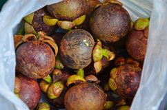 Mangosteen. Very good exotic fruit mangosteen bought in market in thailand Stock Photography