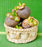 Mangosteen in weave basket Stock Photography
