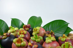 Mangosteen on white background. Asian fruit mangosteen on white background stock photo
