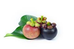 Mangosteen on white background. Asian fruit mangosteen tree colour on white background stock images