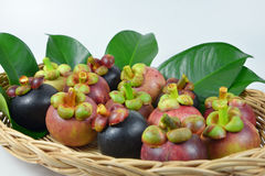 Mangosteen on white background. Mangosteen in the basket on white background Royalty Free Stock Image