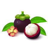 Mangosteen on white background Stock Photography